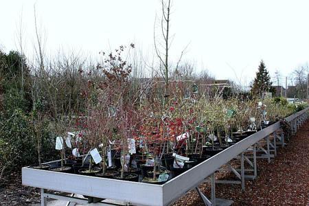 Planten en bomen bij de rode beuk waldnet nieuws - Zinkt de verkoop ...