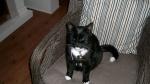 05 december 2016 - Zwart witte kat  paco