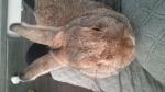 16 december 2016 - Jong konijn gevonden in tuin vrouwtje?