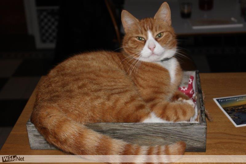 maandag 26 december - Kat vermist