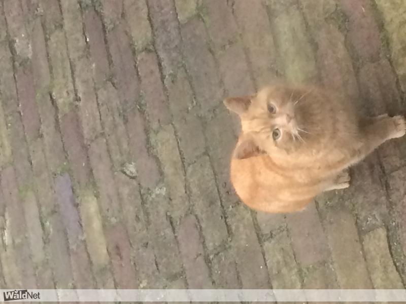dinsdag 03 januari - Wie mist deze kat
