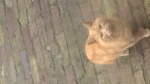 03 januari 2017 - Wie mist deze kat