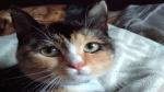 13 januari 2017 - Lizzy poes is vermist