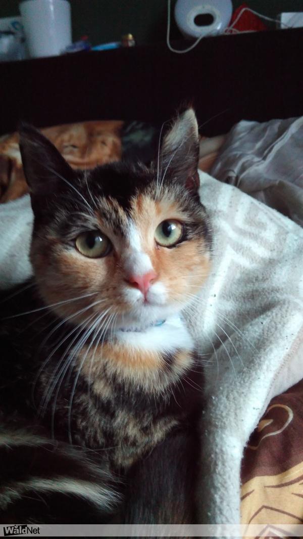 zaterdag 14 januari - Lizzy poes is vermist