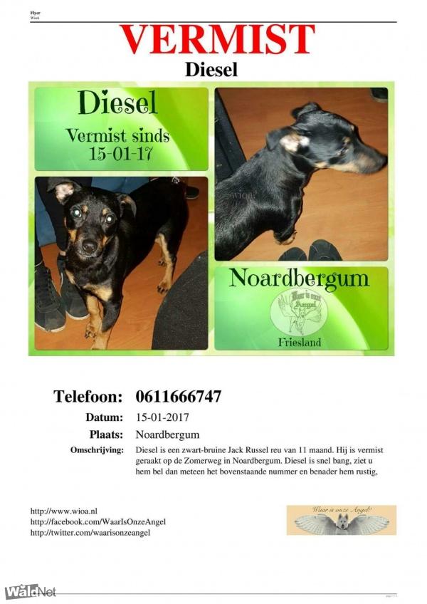 maandag 16 januari - Vermist jackrussel diesel