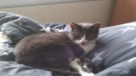 23 januari 2017 - Kat vermist