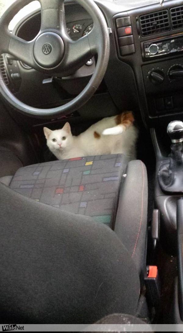 maandag 06 februari - Witte kat vermist!