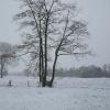 25 januari 2015 Drachten - Winter in Friesland....
