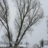25 januari 2015 Drachten - Winter 2015
