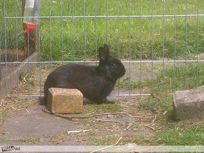 dinsdag 23 mei - Zwart konijntje gevonden