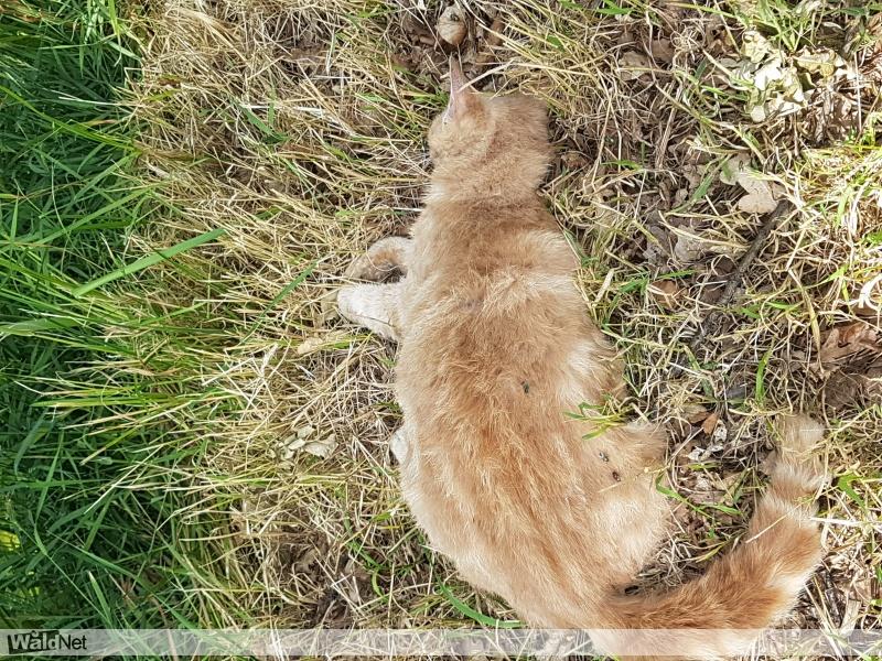 vrijdag 23 juni - Kat gevonden