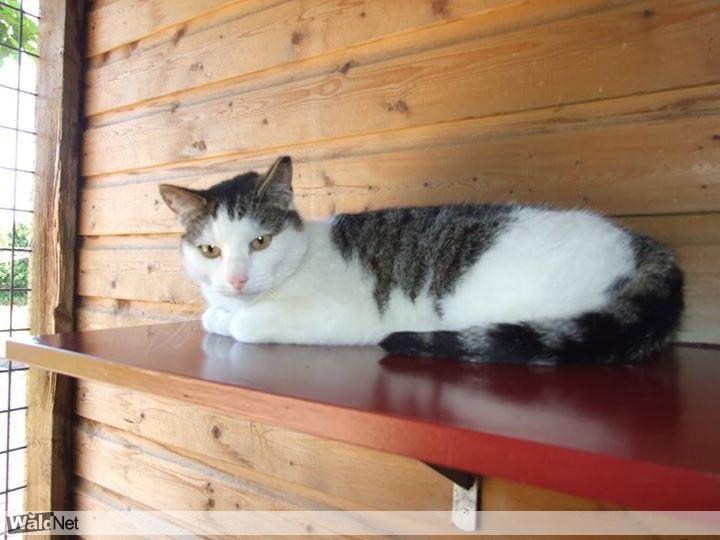 <i>7 uur geleden</i> - Vermist kat Drachten
