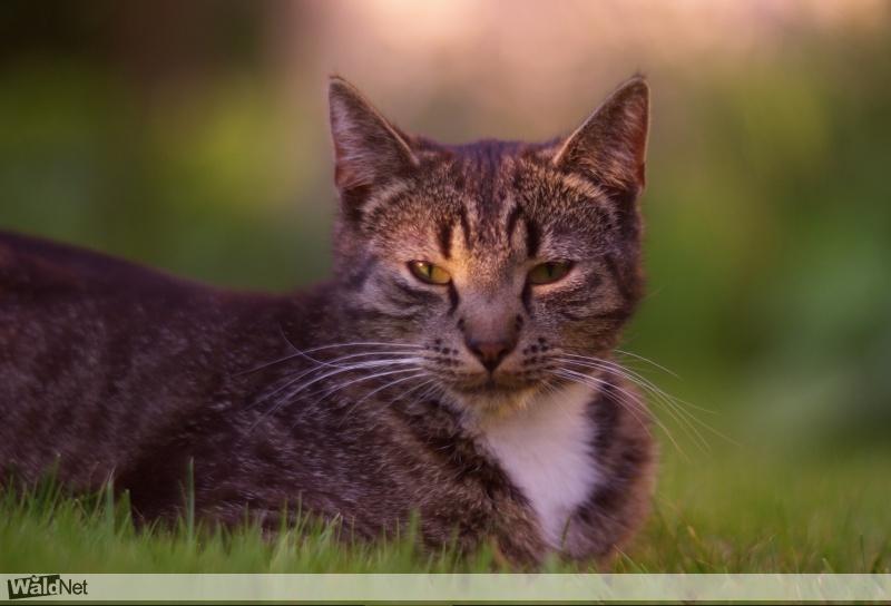 zaterdag 22 juli - Vermiste kat