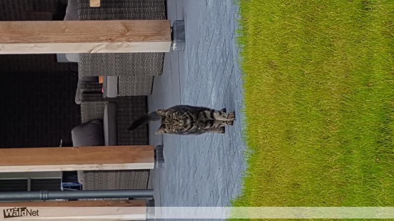 dinsdag 08 augustus - Wie mist deze kat?