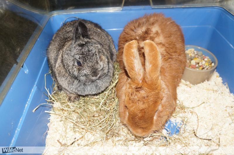 maandag 18 september - 2 Gevonden konijnen te Siegerswoude.