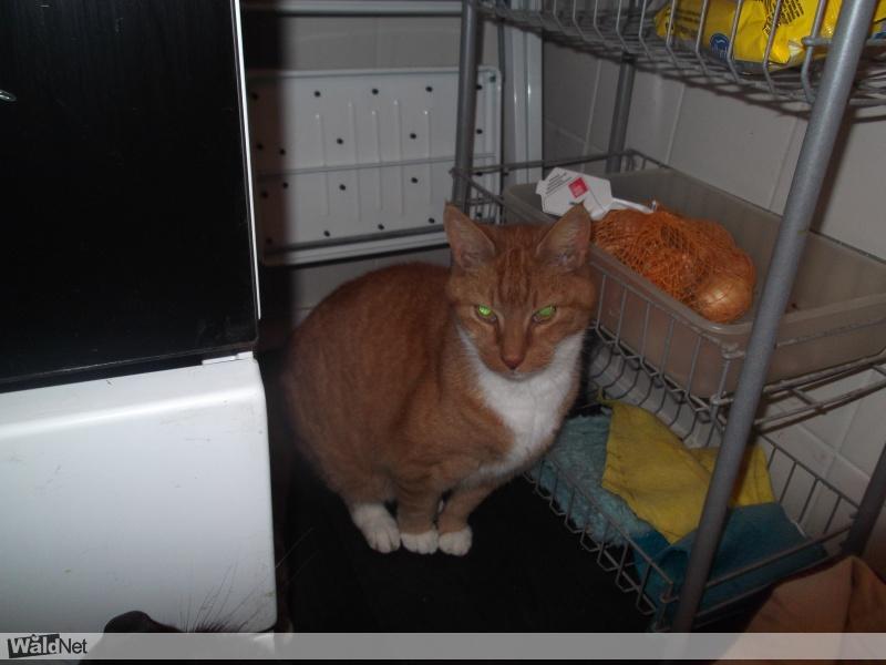 zondag 29 oktober - Van wie is deze kat?an wie is deze kat?