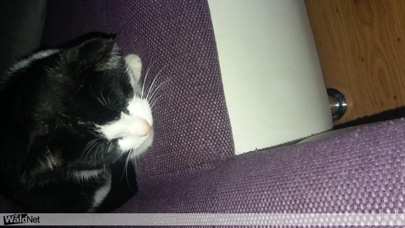 maandag 05 februari - Kat vermist