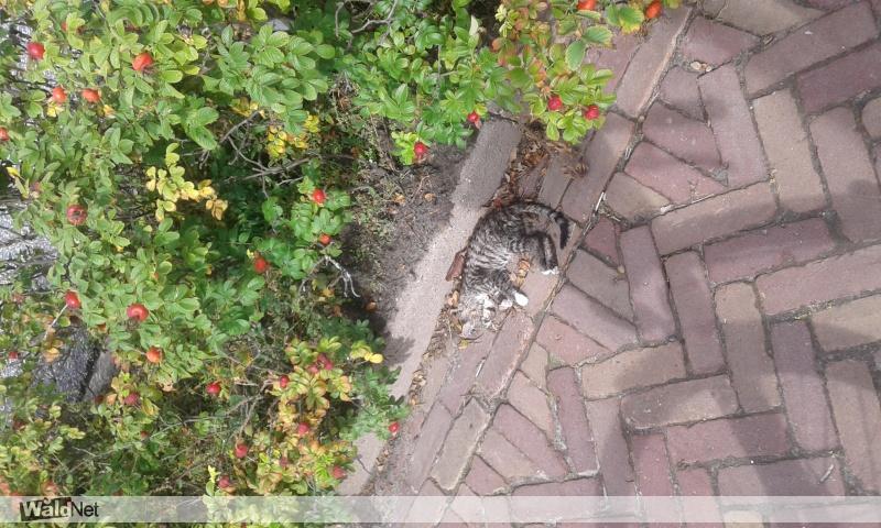 zondag 09 september - Dode kitten