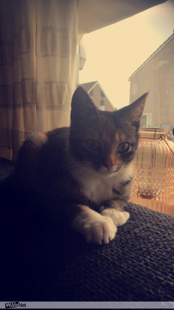 maandag 10 september - Gevonden katje
