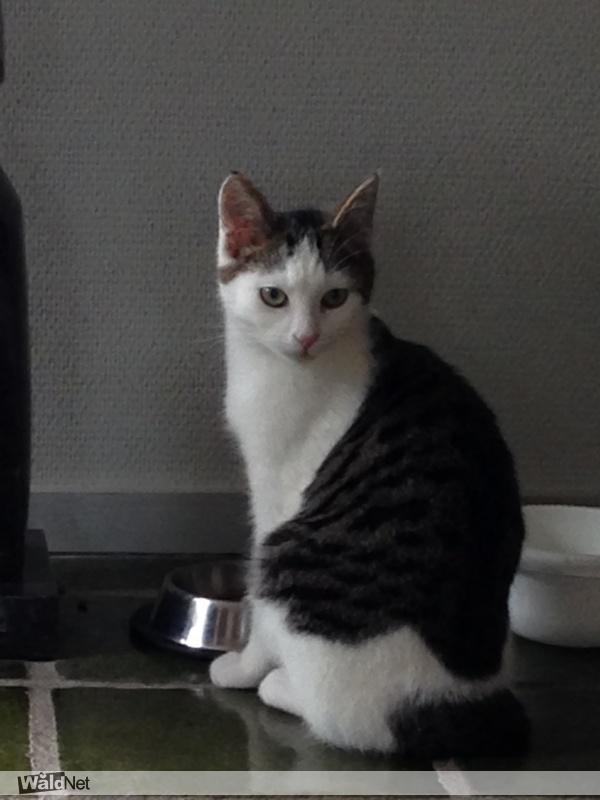 woensdag 07 november - Onze kat is niet thuisgekomen
