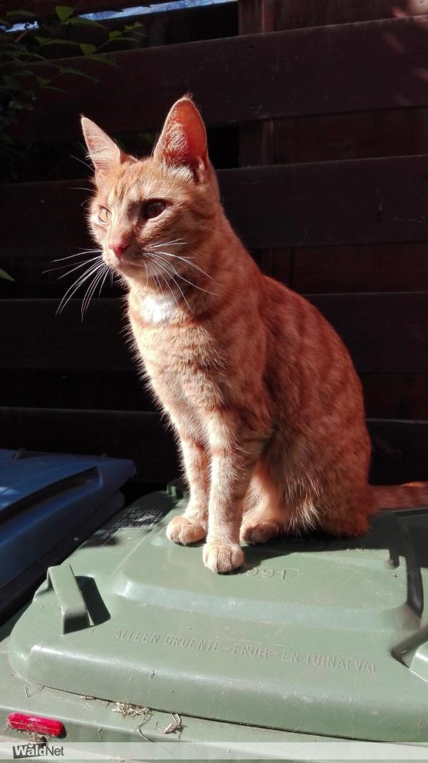 maandag 17 juni - Garfield onze rode kat