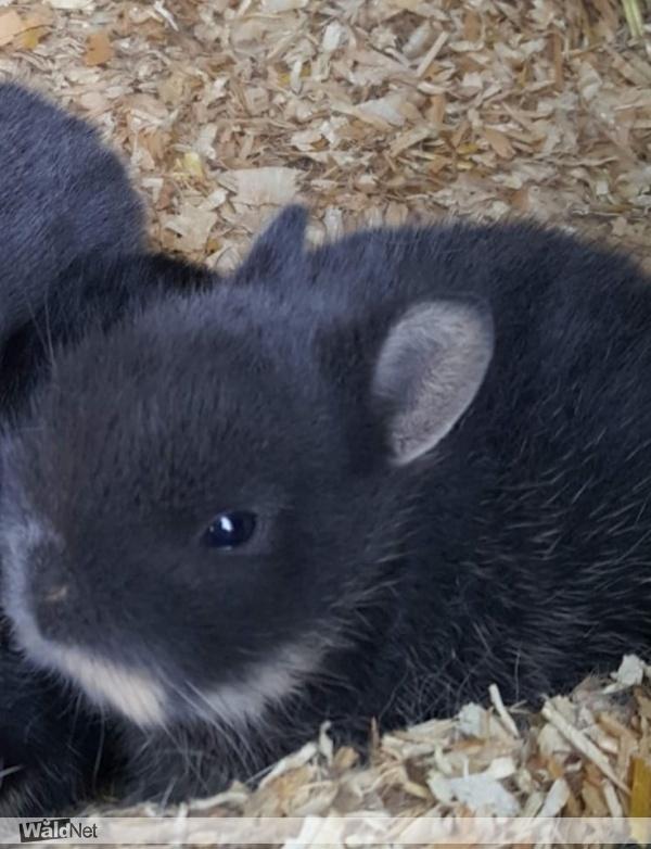 zaterdag 27 juli - wie heeft ons grijze konijntje gezien
