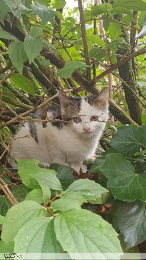 donderdag 01 augustus - Kitten gevonden