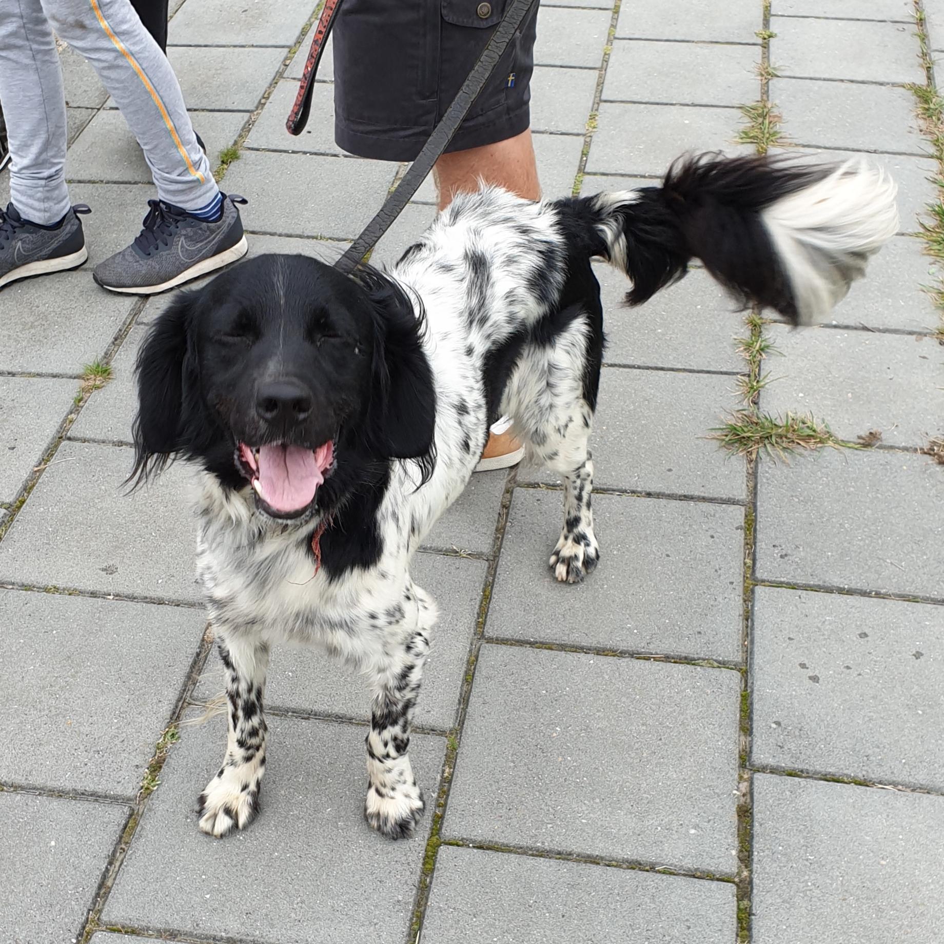vrijdag 06 september - Hond gevonden