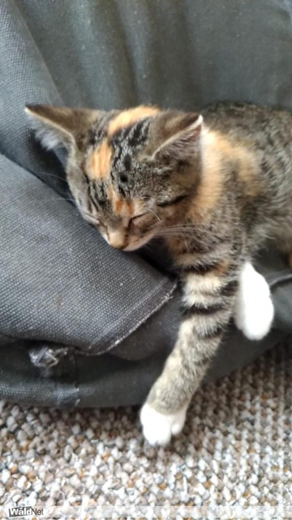 vrijdag 04 oktober - Kat vermist