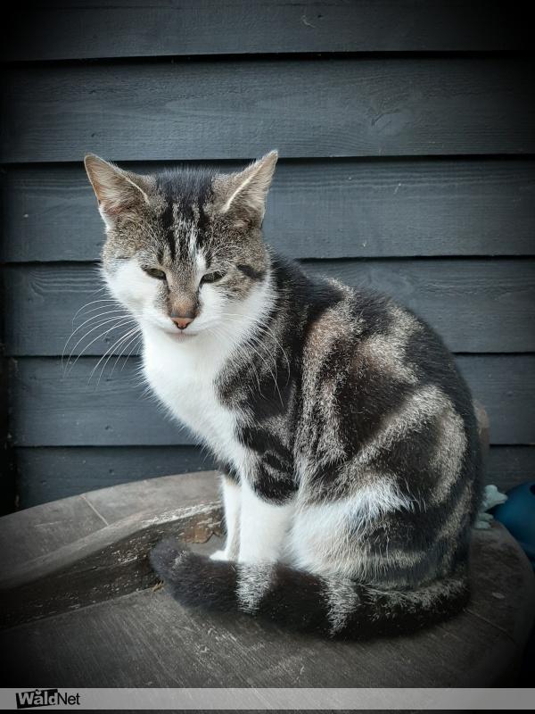 dinsdag 22 oktober - Aan komen lopen, hele lieve kat.
