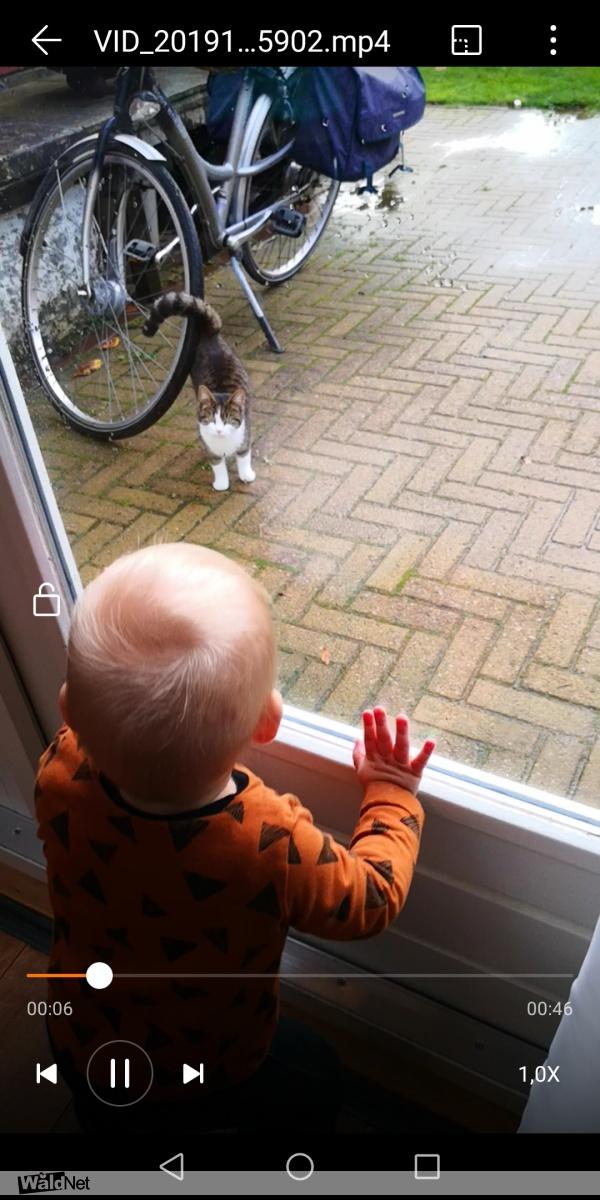 woensdag 06 november - Jong poesje die steeds terugkomt
