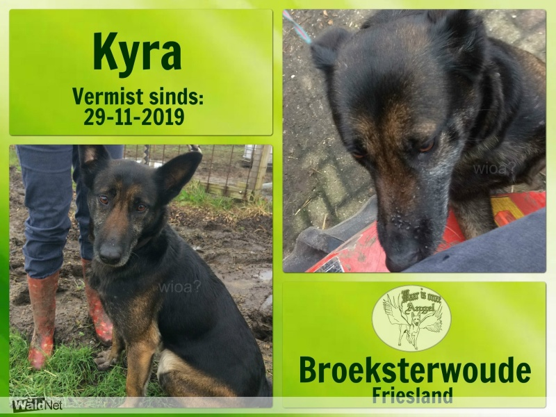 zondag 01 december - Vermist herdershond kyra
