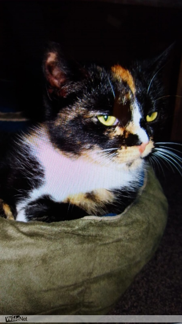 dinsdag 10 maart - Kat vermist