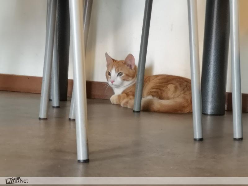 woensdag 18 maart - Wie mist deze kat? (buitenpost)