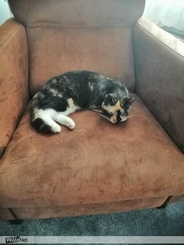 vrijdag 20 maart - Lapjes kat
