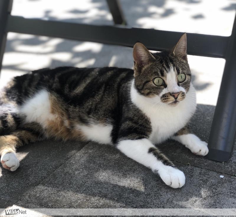 woensdag 08 juli - Vermist onze lieve kat Lea