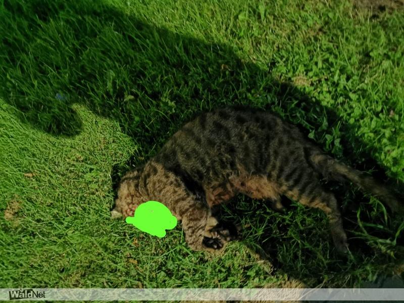 woensdag 05 augustus - Kat aangereden