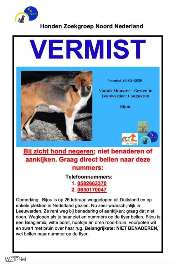 zaterdag 08 augustus - Vermiste hond gezien?
