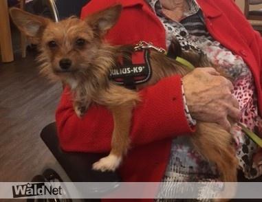 maandag 19 oktober - Vermist hondje Vlinder