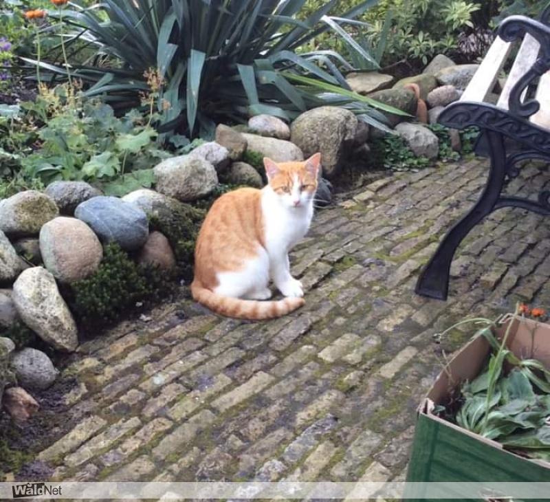 dinsdag 27 oktober - Van wie is deze kat .komt regelmatig