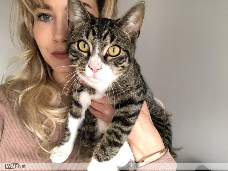 dinsdag 15 juni - Cyperse kat zwart/grijs met wit vermist!