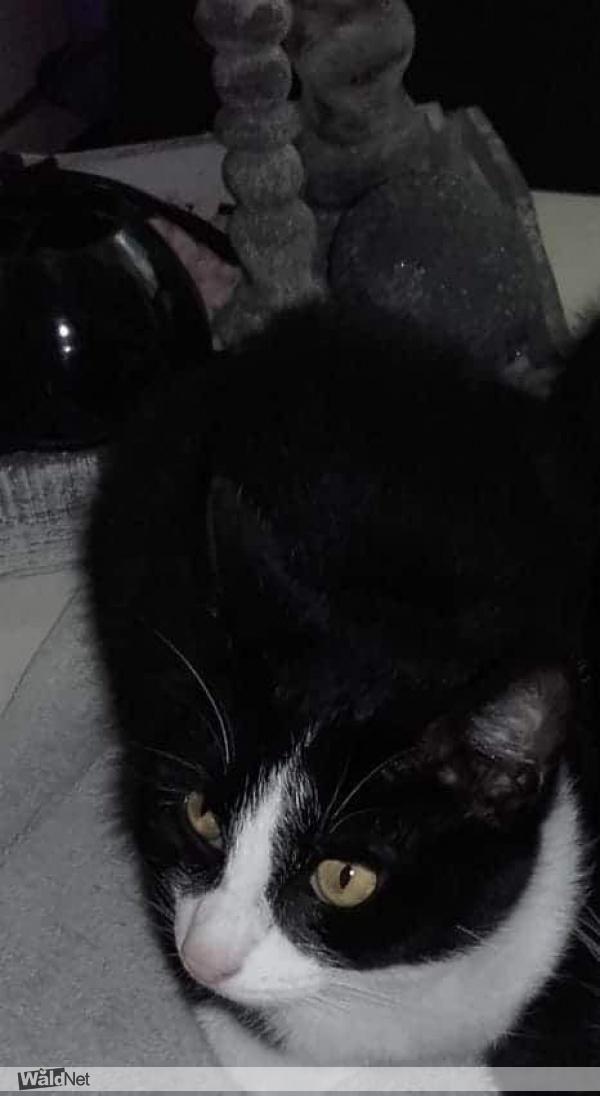 <i>13 uur geleden</i> - Onze lieve kat binky is vermist