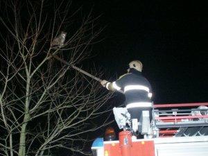 Brandweer redt kat uit boom