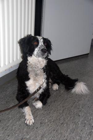 Hond achtergelaten bij dierenarts