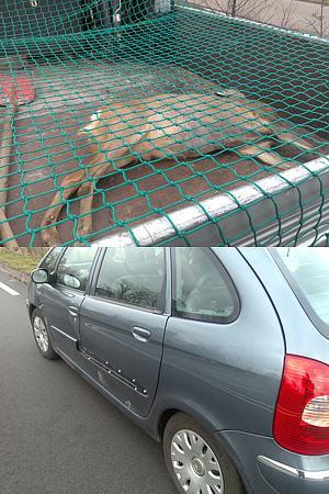 Forse schade aan auto door ree