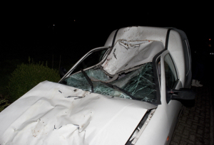Veulen dood bij aanrijding met auto