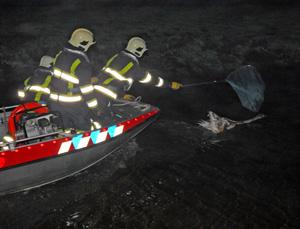 Brandweer ingezet om gewonde zwaan
