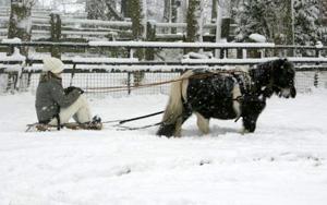 Winterfair afgelast om extreme weer