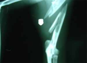 Kat met luchtbuks beschoten in Garyp