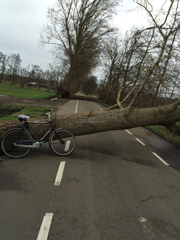 Omgewaaide bomen in De Wilgen: stroomstoring